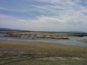 Unrestored salt pond.